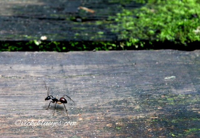 Ant walking