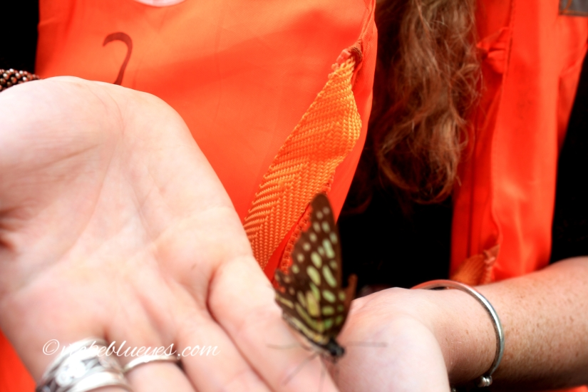 Rescuing a butterfly