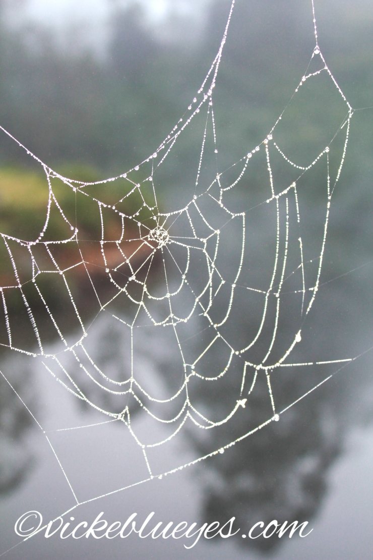 Another Dew Soaked Cobweb