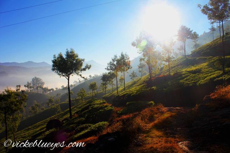 Paradise in Munnar