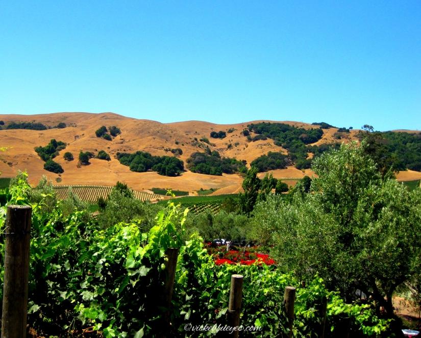 Napa Wine Valley